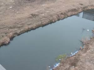 Dejecţiile din tot Bazarul, deversate în râul Suceava. Şi mai grav este că autorităţile ştiau