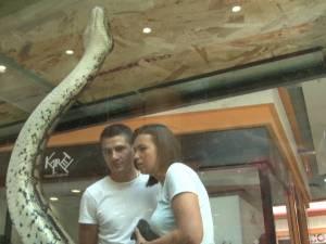 Ţestoase carnivore şi şerpi de peste 5 metri, pe culoarele Shopping City Suceava