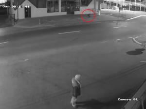 Un urs liber a cutreierat sâmbătă noapte pe străzile Sucevei