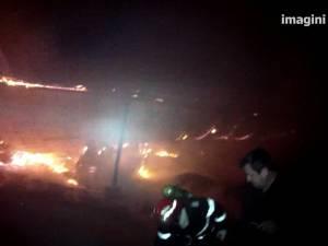 50 de bovine şi şapte porci au pierit într-un puternic incendiu la o fermă din Salcea