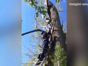 Tânăr peste care a căzut ramura groasă a unui copac, salvat de pompieri