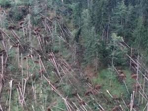 2.335 de hectare de pădure, afectate de doborâturile de vânt, la Moldoviţa