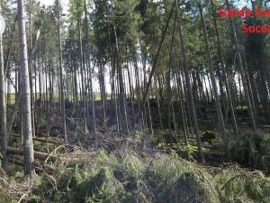 """Arbori de pe două hectare de pădure, doborâți intenționat și declarați """"calamitate"""""""
