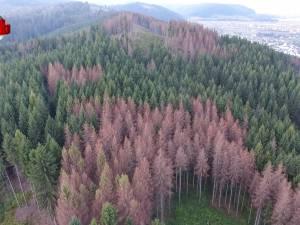 """Sesizare penală făcută de Garda Forestieră Suceava pentru """"distrugere şi degradare de arbori din fondul forestier naţional"""""""