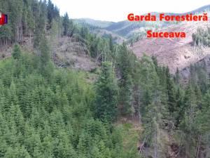 Sancţiuni de peste 2,6 milioane de lei aplicate de Garda Forestieră Suceava în 2017