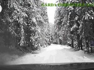 Camere video vor fi montate pe toate mașinile Gărzii Forestiere Suceava