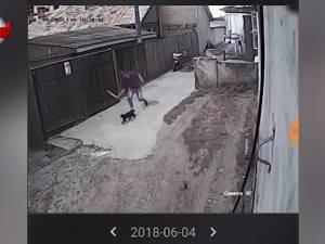 O pisică a fost omorâtă cu bâta, de un individ periculos, în cartierul Burdujeni