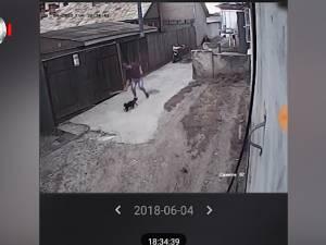 Pisică omorâtă cu bâta, de un individ periculos, în cartierul Burdujeni