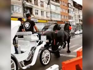 O trăsură cu doi cai frizieni, invitatul surpriză la Salonul Auto Bucovina