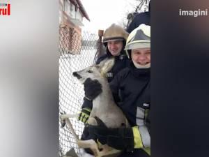 Căprioară salvată de pompieri, după ce s-a agățat într-o plasă de gard, la Siret