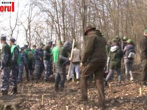 2.300 de stejari, paltini, frasini şi cireşi, plantaţi la Dolhasca cu peste 150 de voluntari