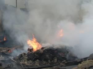Incendiu violent la un adăpost de animale din zona fostelor  sere