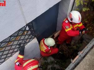 3 pisoi salvați de pompieiri suceveni