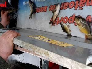 Acumularea Dragomirna, pregătită pentru pescari cu o populare masivă de crap