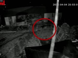 Doi rottweileri au rupt un cățeluș din curtea unei familii din Gura Humorului